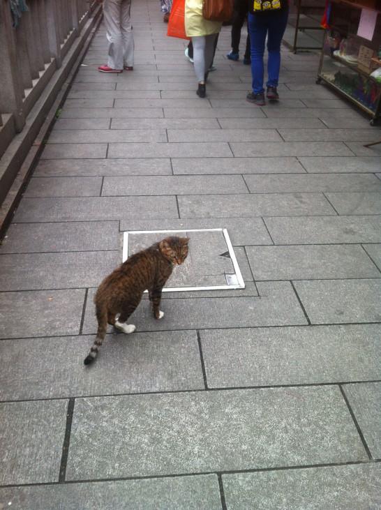 橋にいた猫